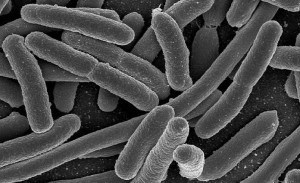 Ne controlează bacteriile din sistemul digestiv alimentaţia?
