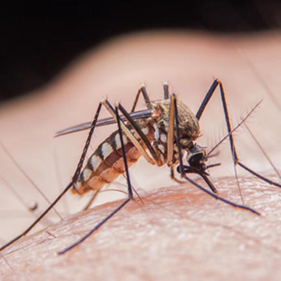 Bolile transmise de țântari